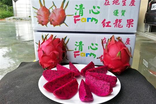 紅肉火龍果