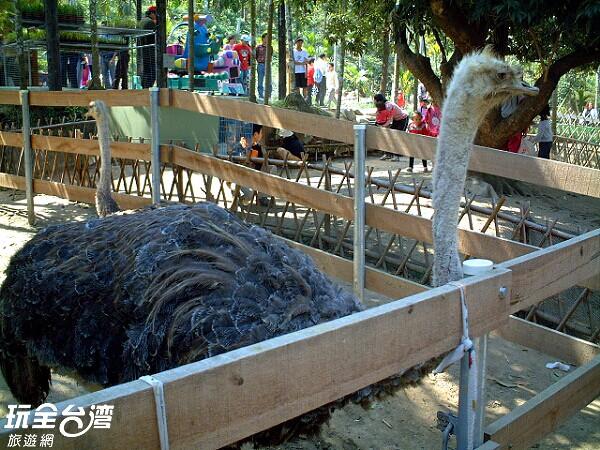 照片來源:玩全台灣旅遊網 5/39