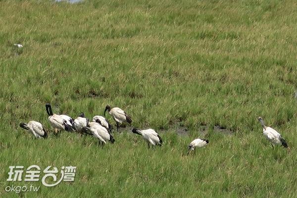 照片來源:玩全台灣旅遊網 19/23
