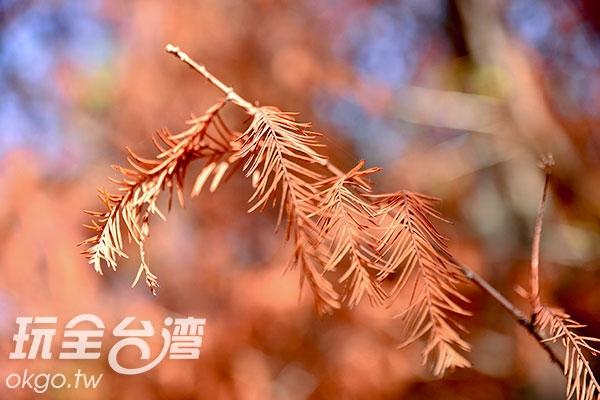 照片來源:玩全台灣旅遊網_特約記者陳健安 5/10