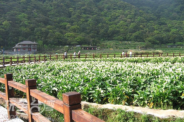 照片來源:玩全台灣旅遊網 7/20