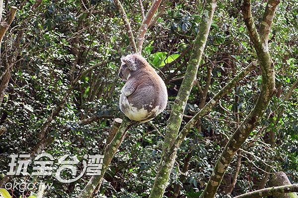 照片來源:玩全台灣旅遊網 18/27