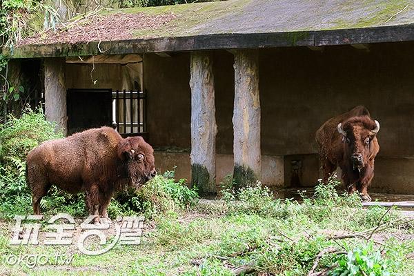照片來源:玩全台灣旅遊網 25/27