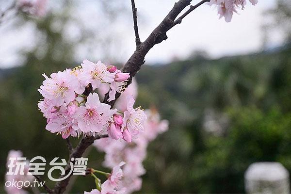 照片來源:陳楊昇 5/5