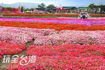 中社觀光花市