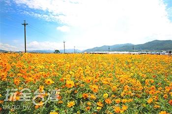 新社花海.二苗圃