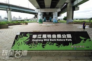 華江橋雁鴨公園