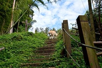 頂石棹步道群.茶之道步道