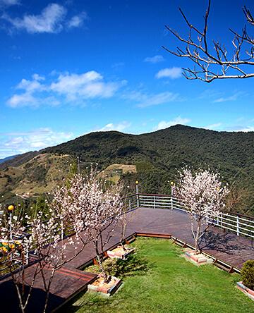 拉拉山.沄峰農場