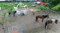 租車免費入園農場騎馬