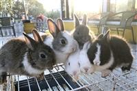 免費入園農場餵兔子