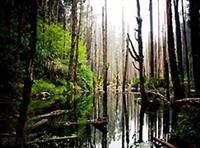 杉林溪 忘憂森林