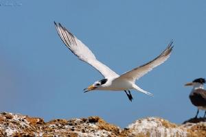 暢遊馬祖離島風情,尋找「神話之鳥」蹤跡
