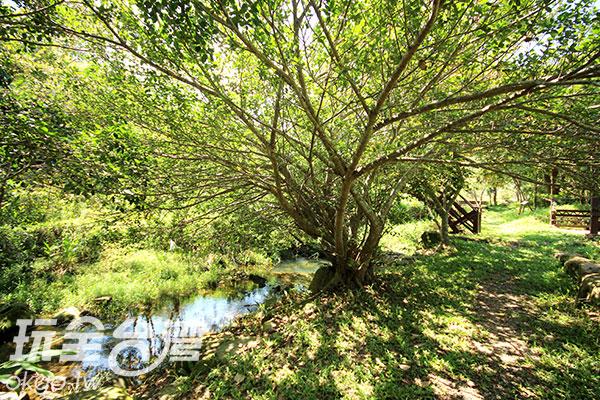 用生態工法打造的河道/玩全台灣旅遊網攝