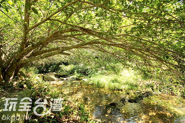公園綠意盎然,非常清幽/玩全台灣旅遊網攝