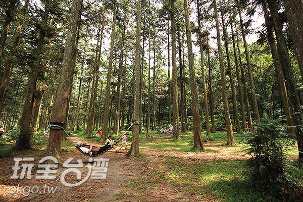 林木參天的惠蓀林場/玩全台灣旅遊網攝