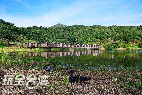 大屯自然公園,春天時尤其美麗/玩全台灣旅遊網特約記者奈奈攝