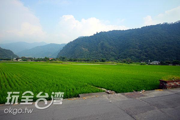 碧綠的稻田鋪設在鄉野間,像是一塊生機盎然的短毛地毯/玩全台灣旅遊網攝