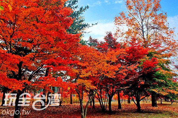 楓紅層層/玩全台灣旅遊網特約記者楊昌林攝