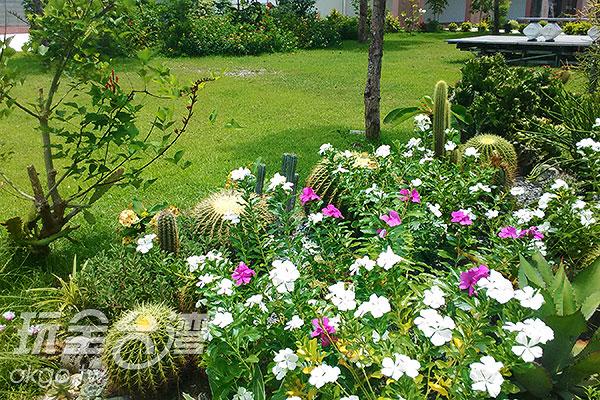 人文餐廳門口栽種多品種的仙人掌,來找找仙人掌花的蹤跡吧!/玩全台灣旅遊網特約記者蔡佩珊攝