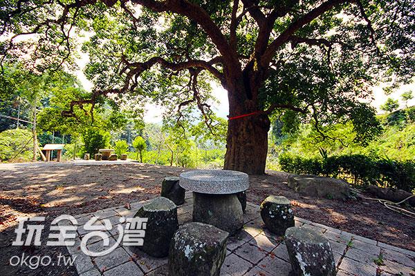 坐在大樹下的石椅上野餐,格外悠閒/玩全台灣旅遊網攝
