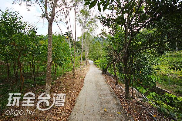 森林小徑蓊鬱迷人/玩全台灣旅遊網攝