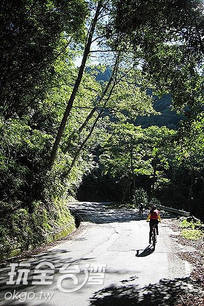 許多人到大雪山林道騎自行車健身/特約記者楊昌林攝