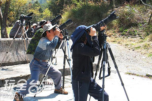 賞鳥人找到好地點就搶拍各種鳥類/特約記者楊昌林攝