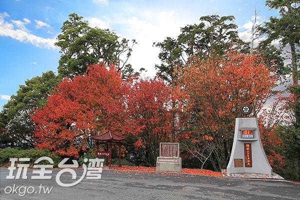 大雪山的楓葉每年自11月起逐漸轉紅/特約記者楊昌林攝