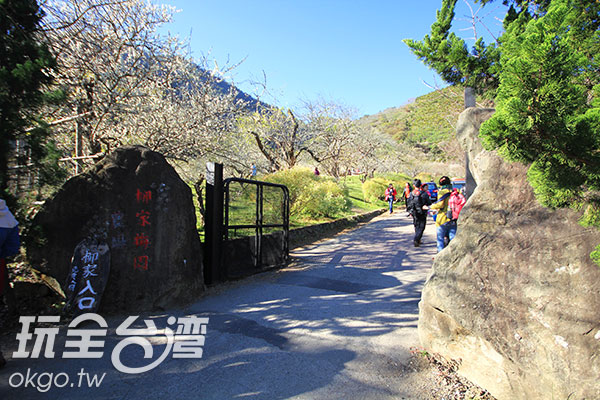 看見門口大石頭就知道柳家梅園到囉/玩全台灣旅遊網攝