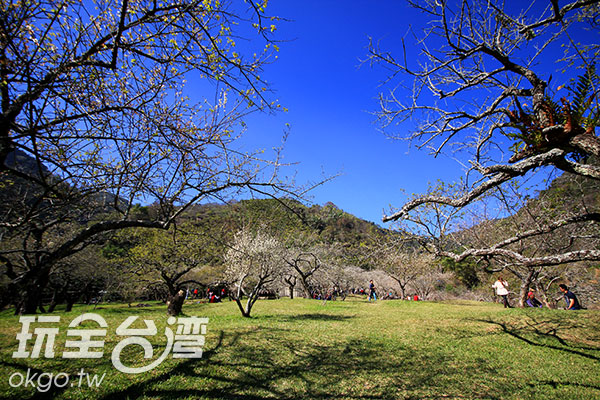 遠山、綠地襯上粉白色的梅花,相當賞心悅目/玩全台灣旅遊網攝