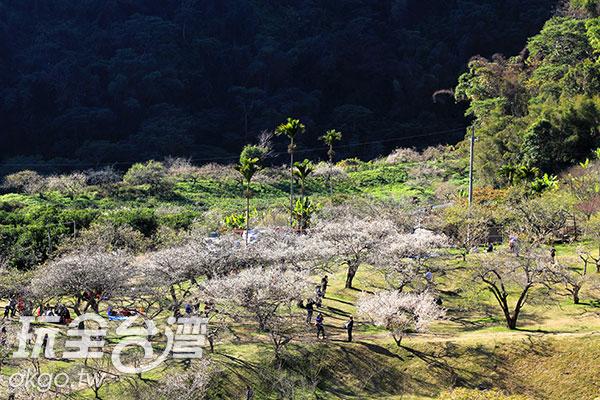 由上往下望去,宛如白雪撲滿山谷/玩全台灣旅遊網攝