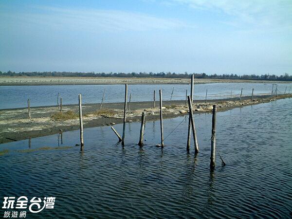 一望無垠的濕地藏有許多無線生機/玩全台灣旅遊網攝