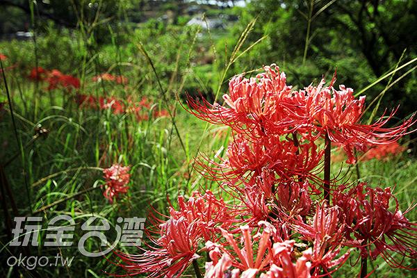 魚路古道現今為生態公園,每個季節都有不同的美景/玩全台灣旅遊網攝