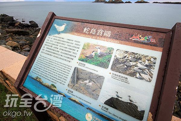 蛇島現今為燕鷗保護區,每年夏季都會有遠方的嬌客在此休憩/玩全台灣旅遊網攝