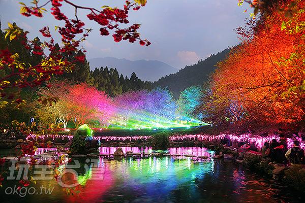 九族的夜櫻是其獨特之處/玩全台灣旅遊網攝