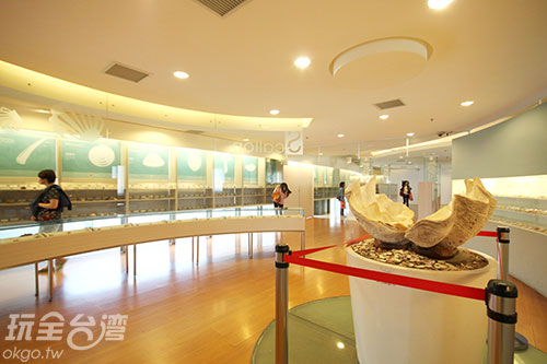 不但有貝殼活化石,還有寶螺五大天王以及重達70公斤的二枚貝/玩全台灣旅遊網攝