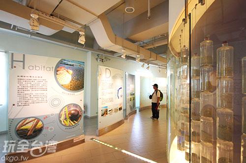 貝殼博物館內館藏豐富/玩全台灣旅遊網攝