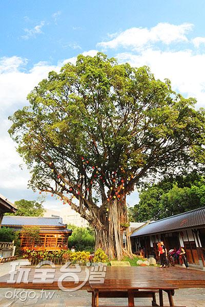 老榕樹於日明治時期就已存在至今,現今常有許多劇場在樹下表演/玩全台灣旅遊網攝