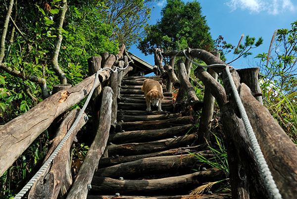 5號步道內有些路段較為陡峭,老人小孩同行時須特別留意/玩全台灣旅遊網特約記者吳明倫攝