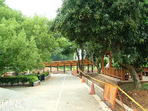福氣飽滿的五福臨門神木非常適合春節時期前來感受祝福/玩全台灣旅遊網攝
