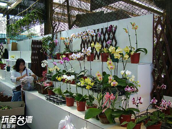 國光花市裡百花盛開,不妨買盆鮮花來裝飾溫暖的家/玩全台灣旅遊網攝