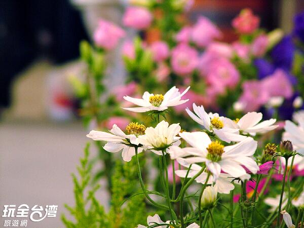 花市裡百花齊放,綠意盎然的氛圍讓人心情也跟著愉悅/玩全台灣旅遊網攝