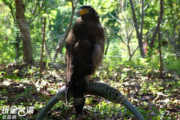 不定時可以看到老鷹等猛禽 /玩全台灣旅遊網攝