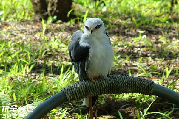 受傷的珍禽鳥類在林間休養 /玩全台灣旅遊網攝
