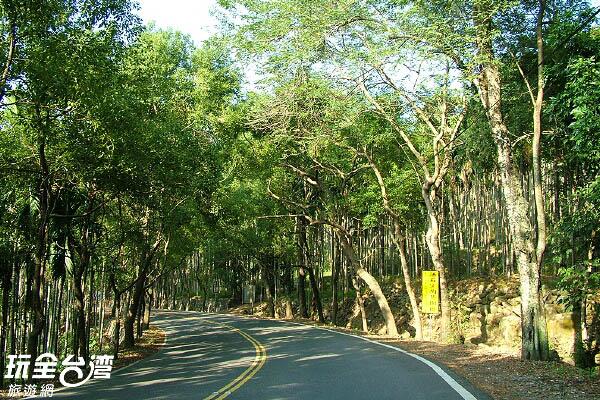枝葉茂密的樟樹矗立道路兩旁,形成綠色隧道 /玩全台灣旅遊網攝