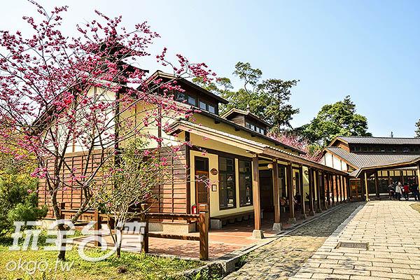 日式校舍搭配櫻花,還以為在日本/玩全台灣旅遊網特約記者陳健安攝