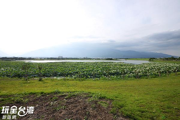 池面上有著豐富的水生植物和水鳥/玩全台灣旅遊網攝