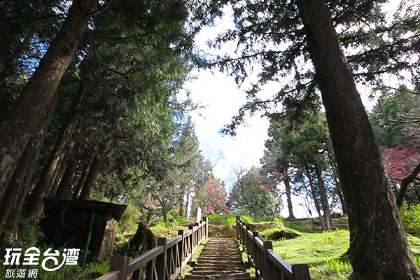 每年三月會有杜鵑花妝點著木棧道/玩全台灣旅遊網攝