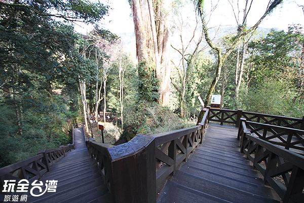 步道串聯著阿里山森林遊樂區內的巨木群/玩全台灣旅遊網攝